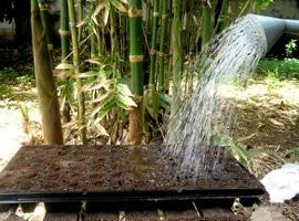 Watering Down